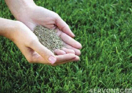 Семена для газона