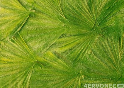 Структурная краска, эффект листьев