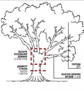 выбор дерева для детского домика
